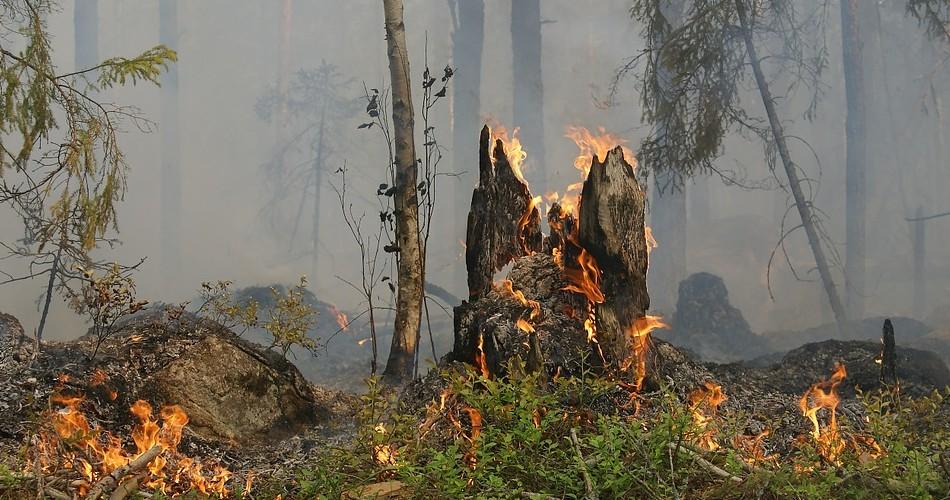 El Gobierno mantiene la situación de Alerta por Riesgo de Incendios Forestales en Gran Canaria y Tenerife